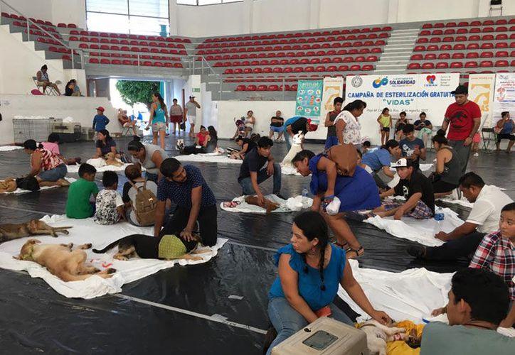 Para llevar a cabo la campaña, se necesitan alrededor de 243 mil pesos. (Octavio Martínez/SIPSE)