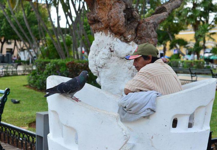 Los yucatecos disfrutarán un fin de semana con tiempo estable. (Luis Pérez/SIPSE)