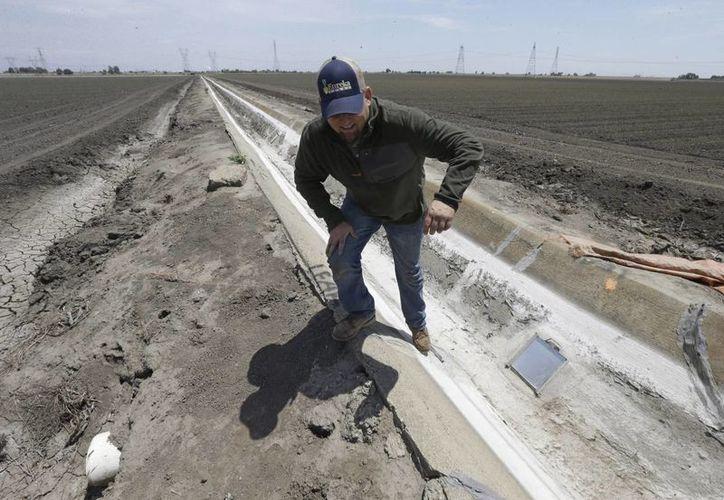 La gran sequía en California ha obliga a restringir el acceso al agua. En la foto, el granjero Gino Celli sobre un canal de riego seco, en ese estado norteamericano. (Foto: AP)