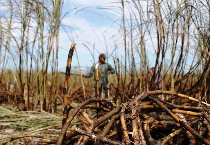 La cifra no se ha podido cumplir debido al mal estado de los caminos y a las lluvias que han impedido la quema. (Edgardo Rodríguez/SIPSE)