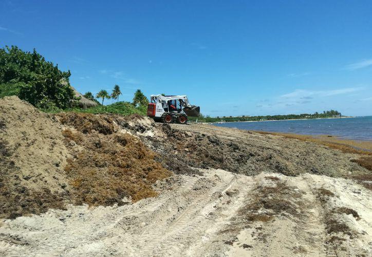 El sargazo se apila en montañas que impide el paso a transeuntes de las playas  públicas, además genera mal olor.  (Octavio Martínez/SIPSE)