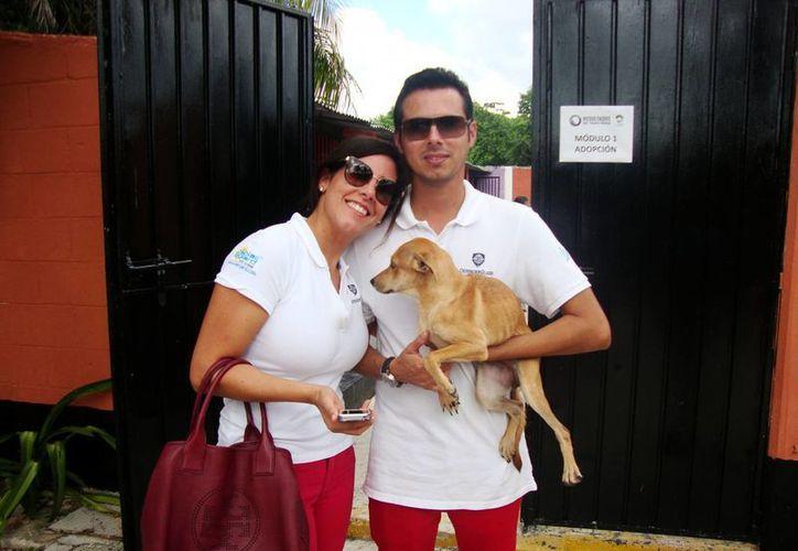 El trámite de adopción es gratuito, los perros se entregan esterilizados, bañados y desparasitados. (Redacción/SIPSE)