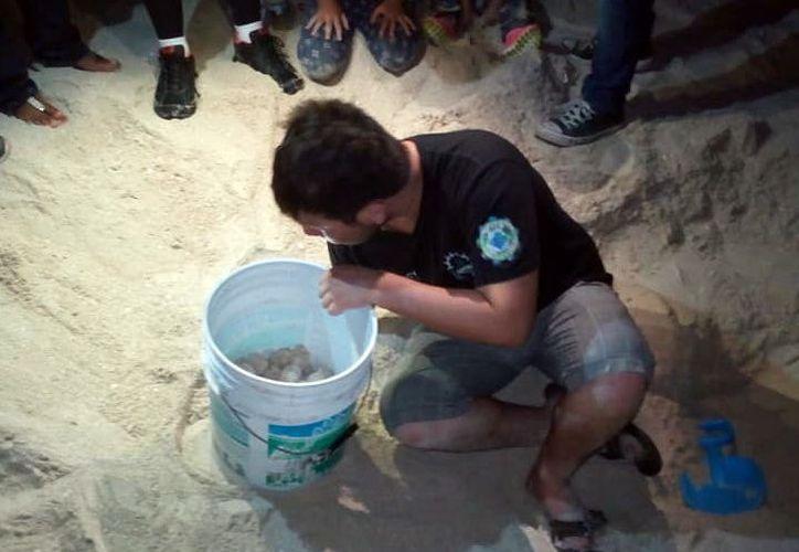 Los huevos de tortuga fueron rescatados por especialistas. (Foto: Milenio novedades)