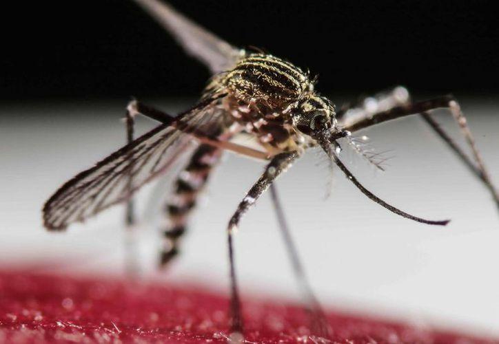 Florida ha registrado hasta el momento 874 casos de zika. (EFE)