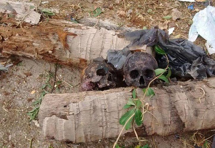 Será muy difícil saber de dónde proceden los cráneos humanos hallados en Xcumpich, pues de entrada no corresponden a personas fallecidas recientemente. (SIPSE)