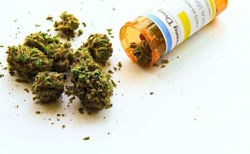 Sólo 73 resoluciones para uso lúdico de la marihuana están en poder de los solicitantes. (Foto: Shutterstock)