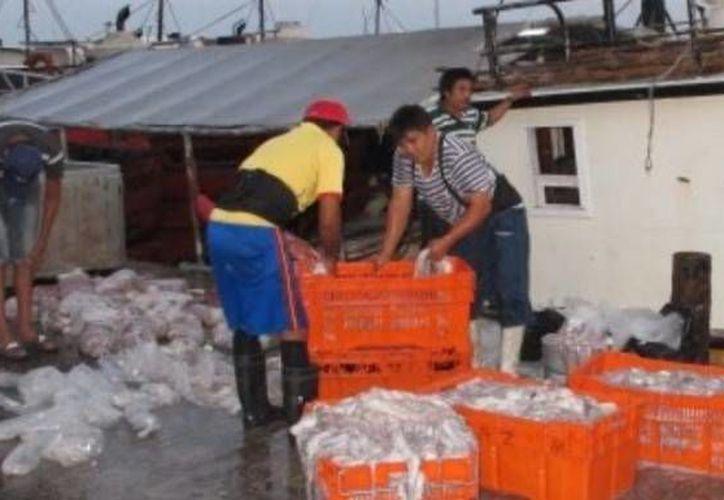 La actividad en los puertos es frenética para ganarle tiempo a la veda del mero y a los frentes fríos. (Óscar Pérez/SIPSE)