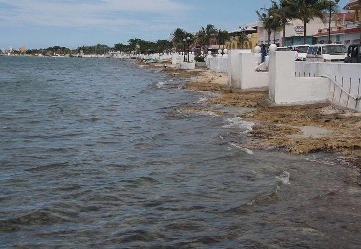 Se pretende verter arena a lo largo de un kilómetro de playa erosionada.  (Julian Miranda/SIPSE)
