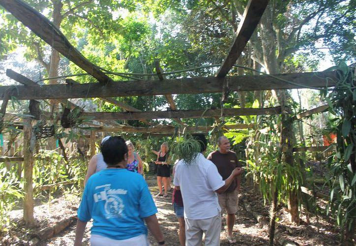 Los visitantes pueden pasar una estancia agradable disfrutando de todo tipo de orquídeas. (Raúl Balam/SIPSE)