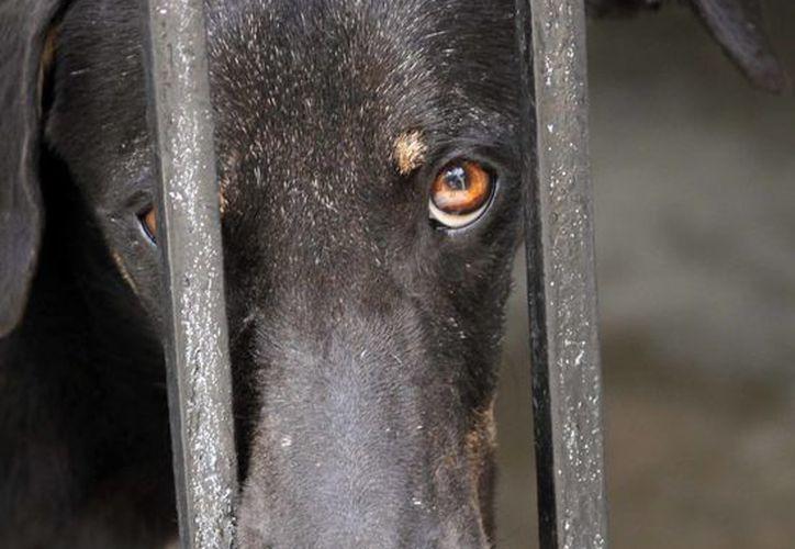 La adopción y el rescate de los animales es una de las actividades principales que realizan. (Redacción/SIPSE)