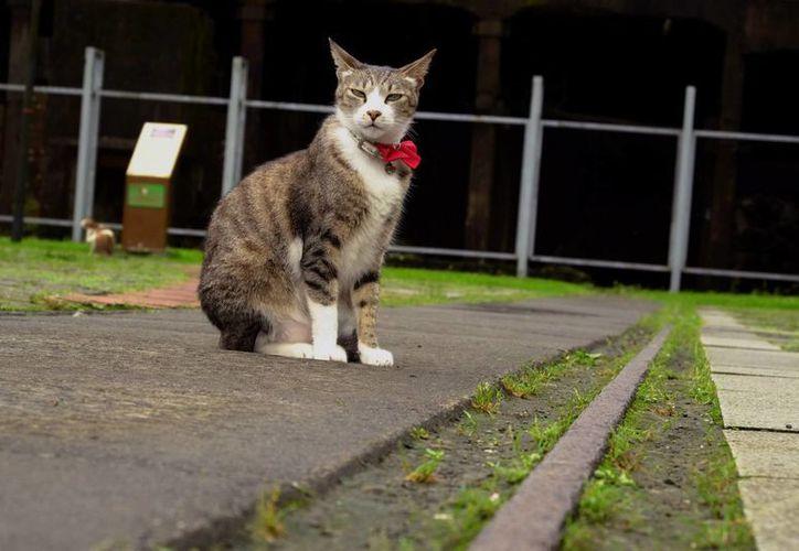 Hallan mecanismos de reacciones alérgicas a gatos. (Foto: Agencias)