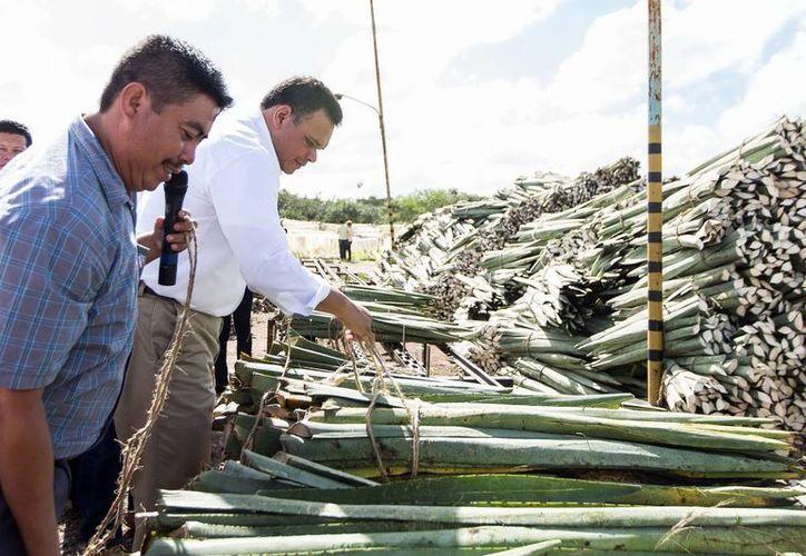 El Gobernador del Estado revisó la planta desfibradora de henequén en Citilcum. (Milenio Novedades)