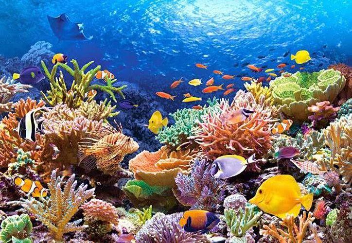 Buscan identificar la proporción de la superficie de arrecifes que está cubierta por los corales. (Contexto/Internet)
