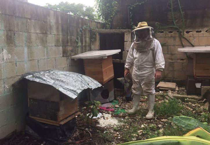 El patio  de su casa en la región 290, se convirtió en el hogar de miles de abejas meliponas y apis mellifera. (Foto: Eva Murillo)