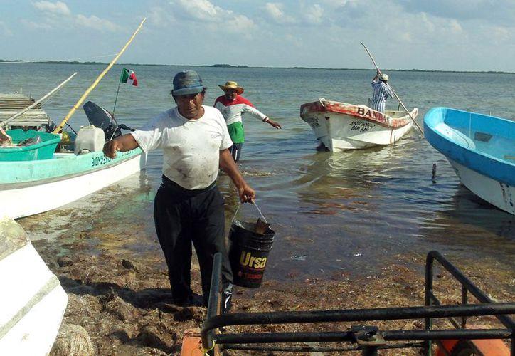 Exhortan a la ciudadanía a no comer mariscos crudos. (Milenio Novedades)