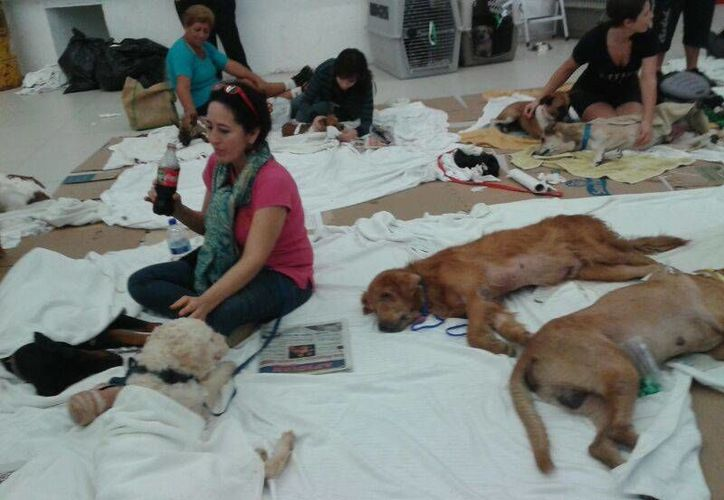 La organización norteamericana Vidas fue la que organizó la campaña, en la que participaron 10 veterinarios y 15 técnicos, además de dos veterinarios mexicanos. (Israel Leal/SIPSE)