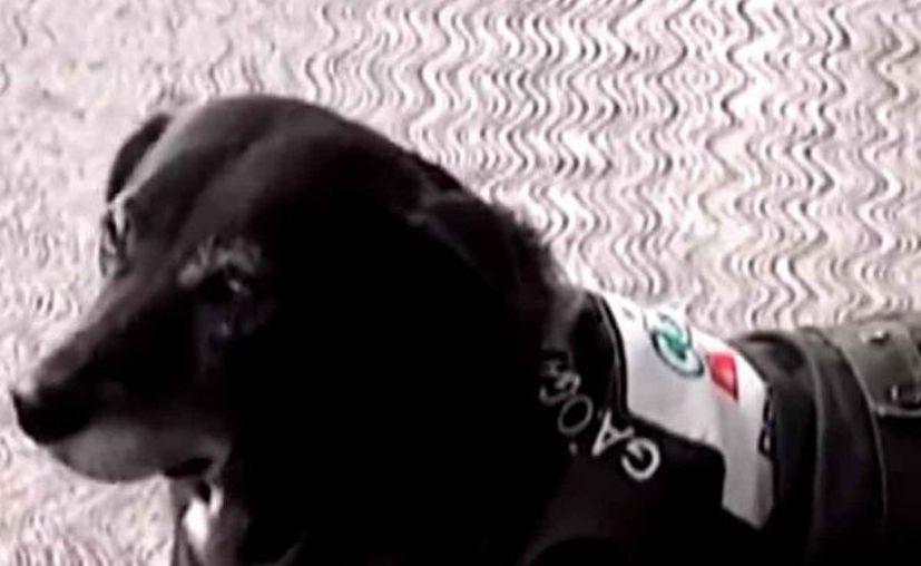 """""""Negrita"""" duerme en la estación e incluso es alimentada, por algunos clientes que ya la conocen. (Captura de pantalla)"""