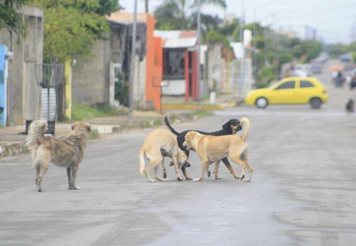 La Ley de Protección y Bienestar Animales del Estado de Quintana Roo castiga el maltrato, crueldad y zoofilia. (Claudia Martín/SIPSE)