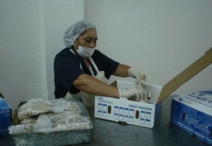 Las esposas de los pescadores y buzos, son capacitadas y se les apoya en la creación de huertos orgánicos familiares. (Edgardo Rodríguez/SIPSE)