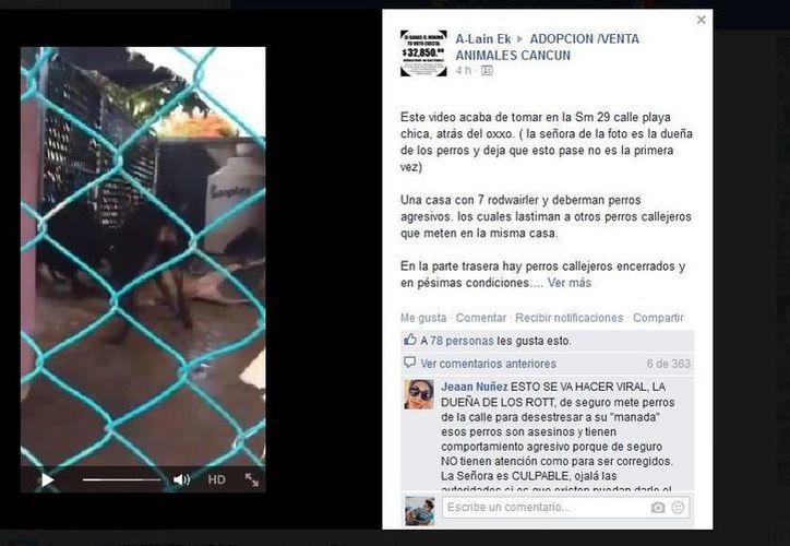 Un video difundido en Facebook indignó a los usuarios de esta red social al mostrar el ataque de tres perros hacia uno más pequeño. (Facebook)