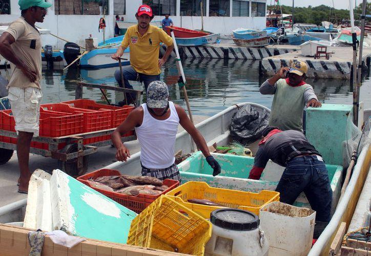 Yucatán se ubica en el primer lugar nacional y el tercer lugar mundial en la pesca de esta especie. (Foto: Gerardo Keb)