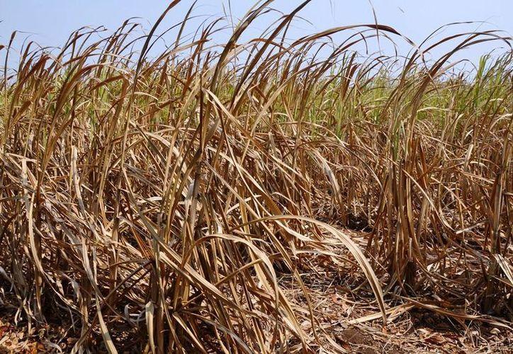 El Centro Nacional de Prevención de Desastres (Cenapred), establece que el clima en el país es anormalmente seco. (Edgardo Rodríguez/SIPSE)