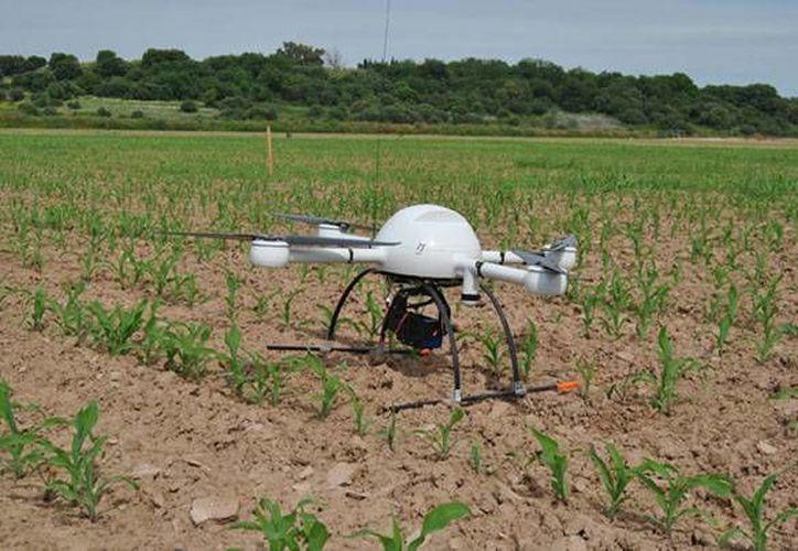 La Unidad de Inteligencia Fitozoosanitaria de la Senasica informó que cuentan con varios drones que ayudan a detectar plagas en las producciones del campo mexicano y con eso evitar afectaciones al sector agrícola. (Imagen de contexto/ 2000agro.com.mx)