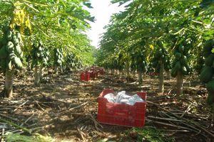 Cultivo sustentable ofrece a campesinos millonarias ganancias