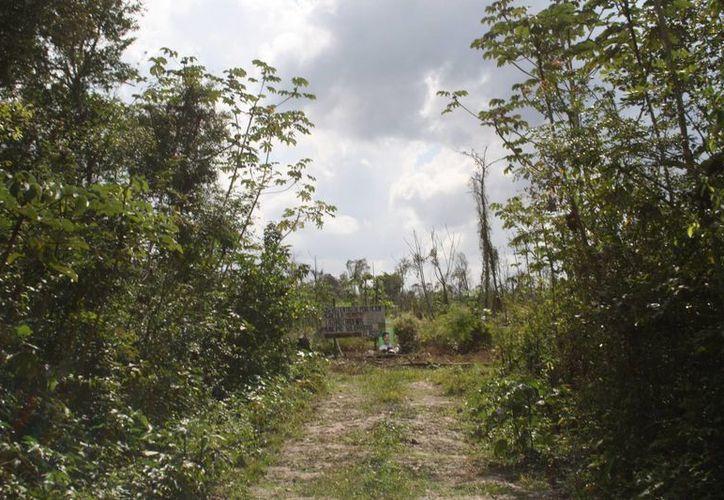 Se pretende proteger más de 3 mil hectáreas de selva del ejido Lázaro Cárdenas. (Octavio Martínez/SIPSE)