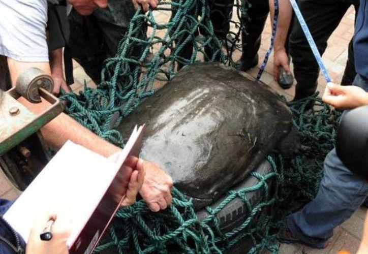 Muere la última tortuga hembra de caparazón blando en China. (Foto: EFE)