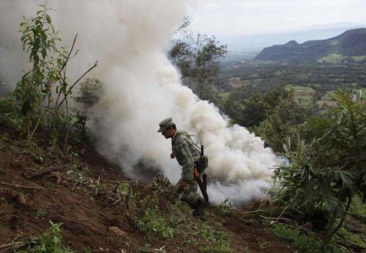 Guerrero se ubica dentro de los tres primeros lugares en la producción de marihuana en México. (SIPSE Archivo)