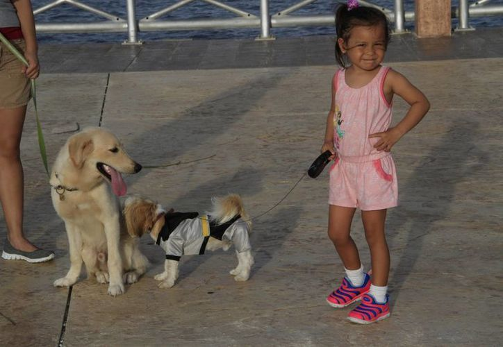 Otras toman en cuenta el seguro por robo y ofrece una indemnización del valor del animal. (Tomás Álvarez/SIPSE)