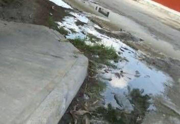 Agua acumulada en una calle de la colonia Benito Juárez del puerto de Progreso. (Óscar Pérez/SIPSE)