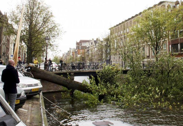 Cientos de árboles fueron arrancados o rotos, lo que bloqueó caminos y aplastó autos. (Agencias)