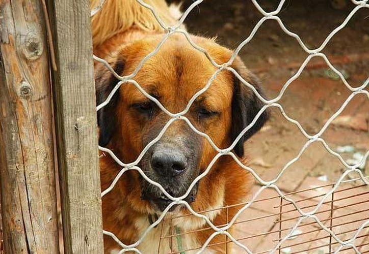 Brindan pláticas de concienciación antes de que la persona adopte una mascota. (Contexto/Internet)