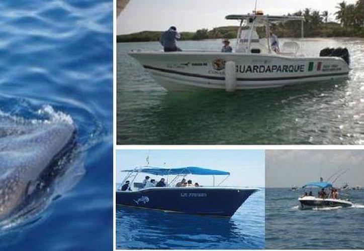 """El operativo lleva por nombre """"Vigilancia en la zona de alimentación y avistamiento del Tiburón Ballena"""". (Redacción/SIPSE)"""