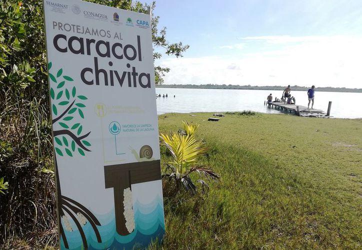 Buscan proteger el balneario El Ecológico, de Bacalar. (Javier Ortiz/SIPSE)