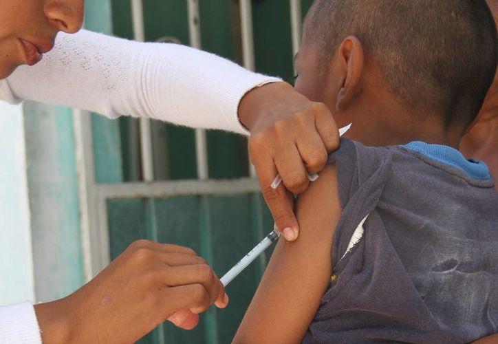 También se aplicarán inyecciones de la tripe viral. (Consuelo Javier/SIPSE)