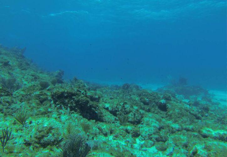 Los arrecifes de Quintana Roo forman parte del estudios que se ha realizado en el Caribe. (Tomás Álvarez/SIPSE)