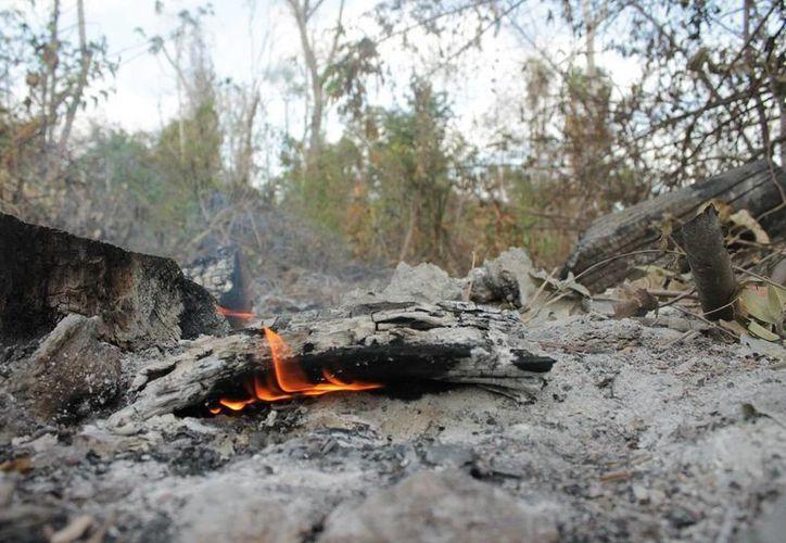 Buscarán a los dueños de los predios susceptibles de incendios para brindarles información preventiva. (Ángel Castilla/SIPSE)