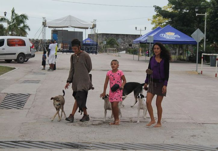 Existen cerca de cinco mil mascotas en la ciudad, tanto domésticos como en situación de calle. (Javier Ortiz/SIPSE)