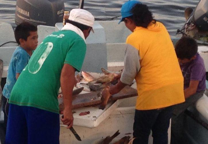 A una semana de que inicie la temporada de captura de pulpo, empresarios pesqueros reportan que la captura de mero y langosta ha traído muy buenas ganancias. (Gerardo Keb/Milenio Novedades)