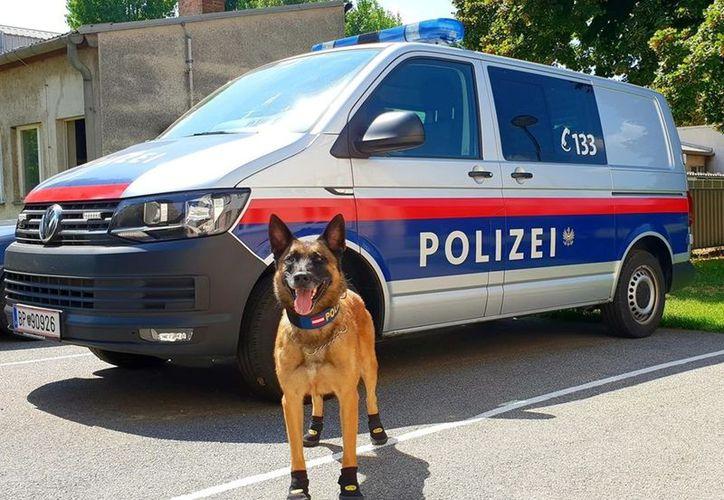 La policía incluso recomienda a los ciudadanos emular la medida en bien de los perros. (Internet)