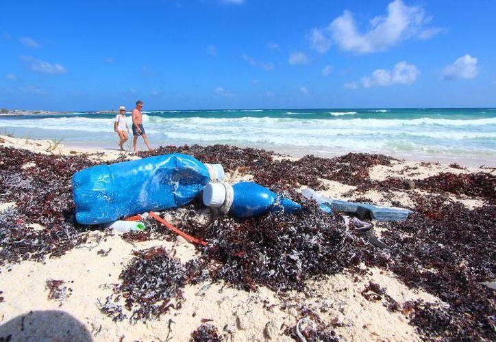 En las labores de limpieza de playas en la zona oriental de Cozumel, participaron 635 voluntarios. (Archivo/SIPSE).