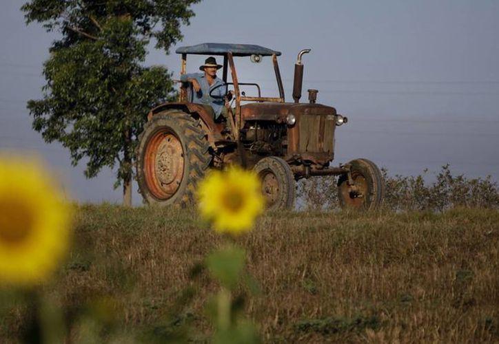 Foto de archivo del 22 de febrero de 2011, un granjero maneja su tractor en Pinar del Río Cuba. El gobierno de EU aprobó la apertura de la primera fábrica estadounidense en Cuba en más de medio siglo. (Foto AP/Javier Galeano, Archivo)