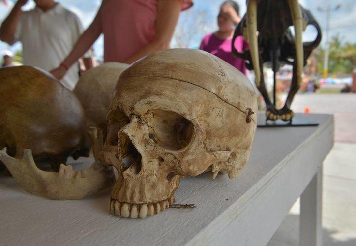 Las réplicas de los restos de la Era de Hielo hallados en Quintana Roo son exhibidos en Cozumel. (Gustavo Villegas/SIPSE)