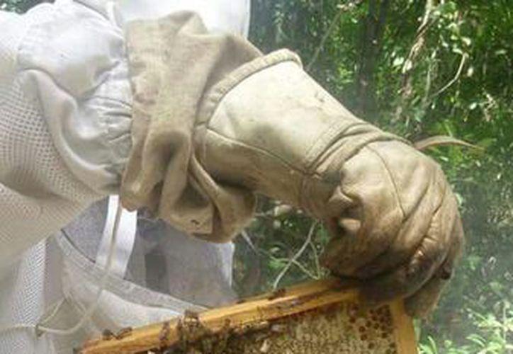 Los productores temen que la dependencia desvíe los recursos para las 57 comunidades del municipio de Bacalar. (Carlos Castillo/SIPSE)