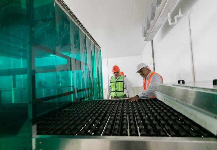 Con la expansión de sus plantas en Yucatán, Grupo Modelo y Bachoco confirman su confianza en la entidad. En las fotos, el gobernador Rolando Zapata durante un recorrido en las instalaciones de la incubadora en Kanasín. (Fotos cortesía del Gobierno)