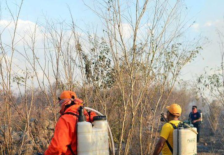 El año pasado se quemaron unas siete mil hectáreas, mil menos que en 2015. (Milenio Novedades)