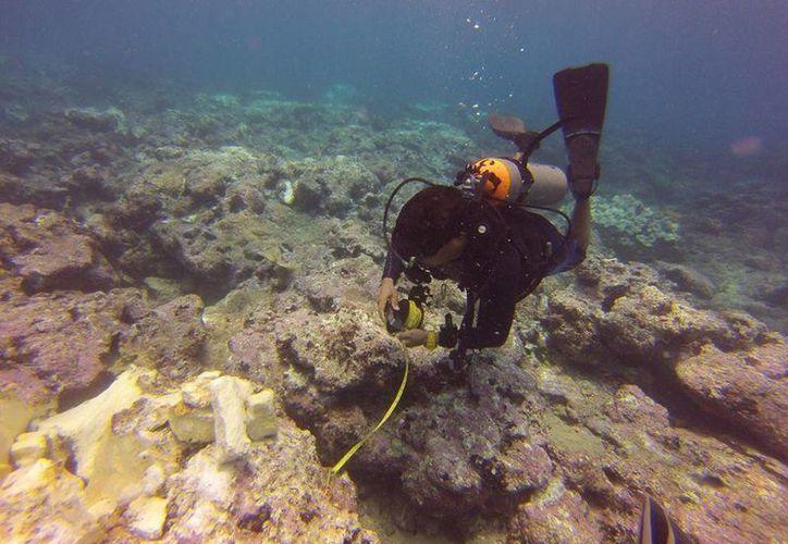 El arrecife Lobos-Tuxpan resultó con daños irreversibles por el encallamiento del barco MU DU BONG. (Profepa)